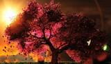 Cherry Blossom (Music)