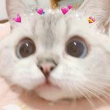 Kadzuko