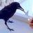 smokinbird